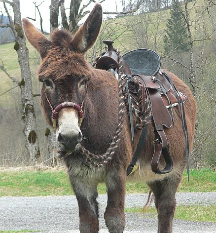 Donkey saddle