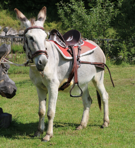 donkey pack saddle